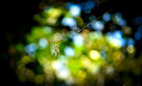 Spider, Kenting National Park